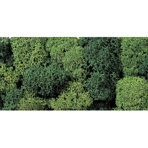Lichen, Green Mix